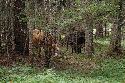 lesy Durmitor (nahrál: admin)