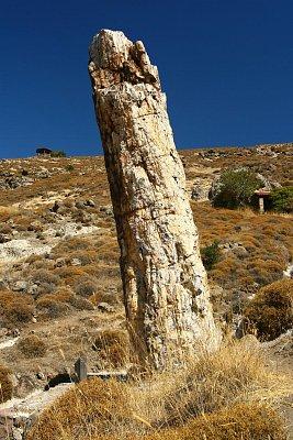 Lesbos-zkamenělý les - nádherná podívaná na přírodní úkaz (nahrál: Terry)