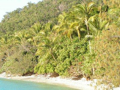 Pláž v Cairns (nahrál: admin)
