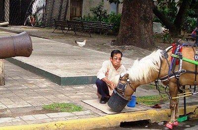Filipínec (nahrál: admin)