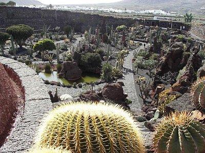 Jardín de Cactus - kousek od městečka Guatiza  rozmanitost kaktusů,architekt této zahrady byl César Manrique  Ostrov Lanzarote  dovolená leden 09 (nahrál: Edita)