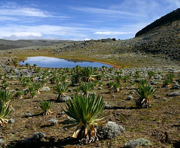 NP Bale mountains
