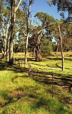 Skelet blahovičníku - Často se v krajině ponechávají staré stromy, které slouží pro úkryt a hnízdění ptactva (nahrál: Luboš)