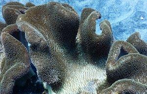 Potápění  na Bali a v okolí